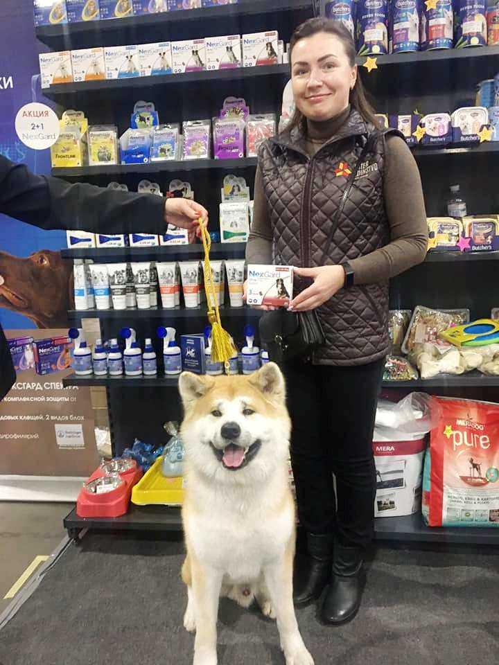 выставки собак всех пород
